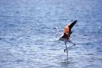 Σπάνια είδη πτηνών